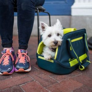 Carriers for dogs on Amtrak are a must!