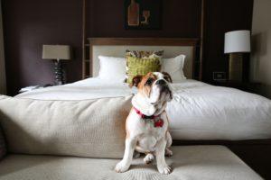 dog road trip hotel