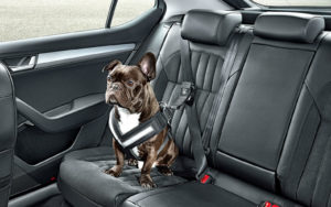Specialty dog seat belts are important for car travel with dogs