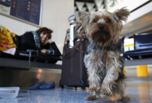 flying home with your dog for the holidays