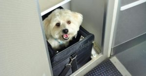 Airline approved carries for flying with dogs.