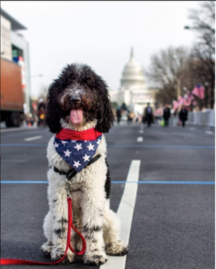 DC dogs you should be following on Instagram
