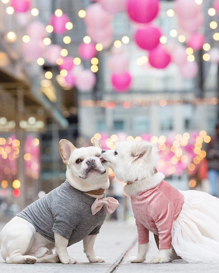 It's More Than Puppy Love: An Interview with Instagram's Engaged Dog Couple