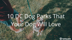 "A picture of a dog smiling and sitting on the grass with text over it that reads ""10 DC Dog parks that you dog will love"""