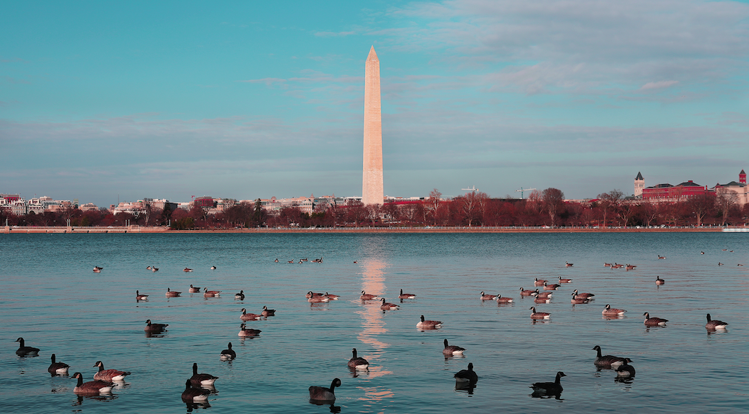 A pond full of ducks sits in the foreground with the Washington monument in the background