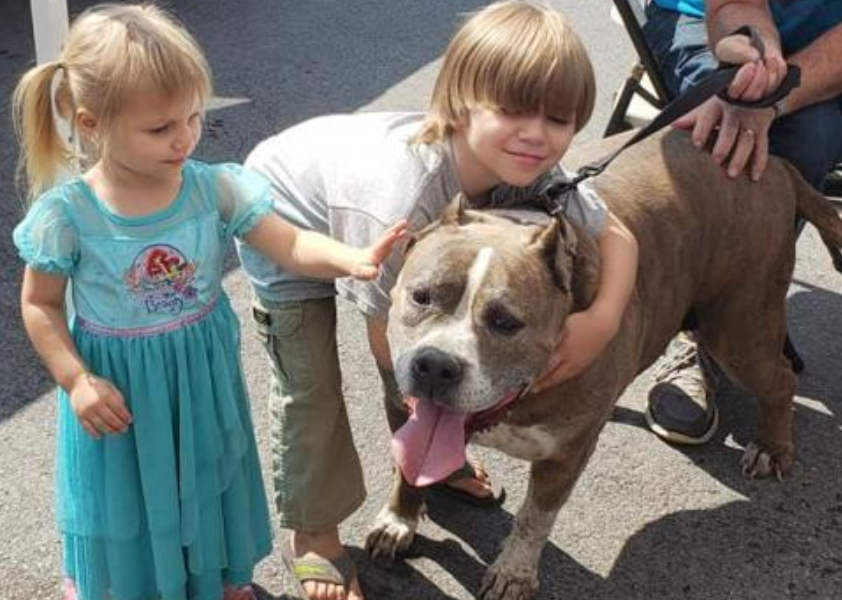 Ali, the pit bull, is getting some love from a few children in this photo.