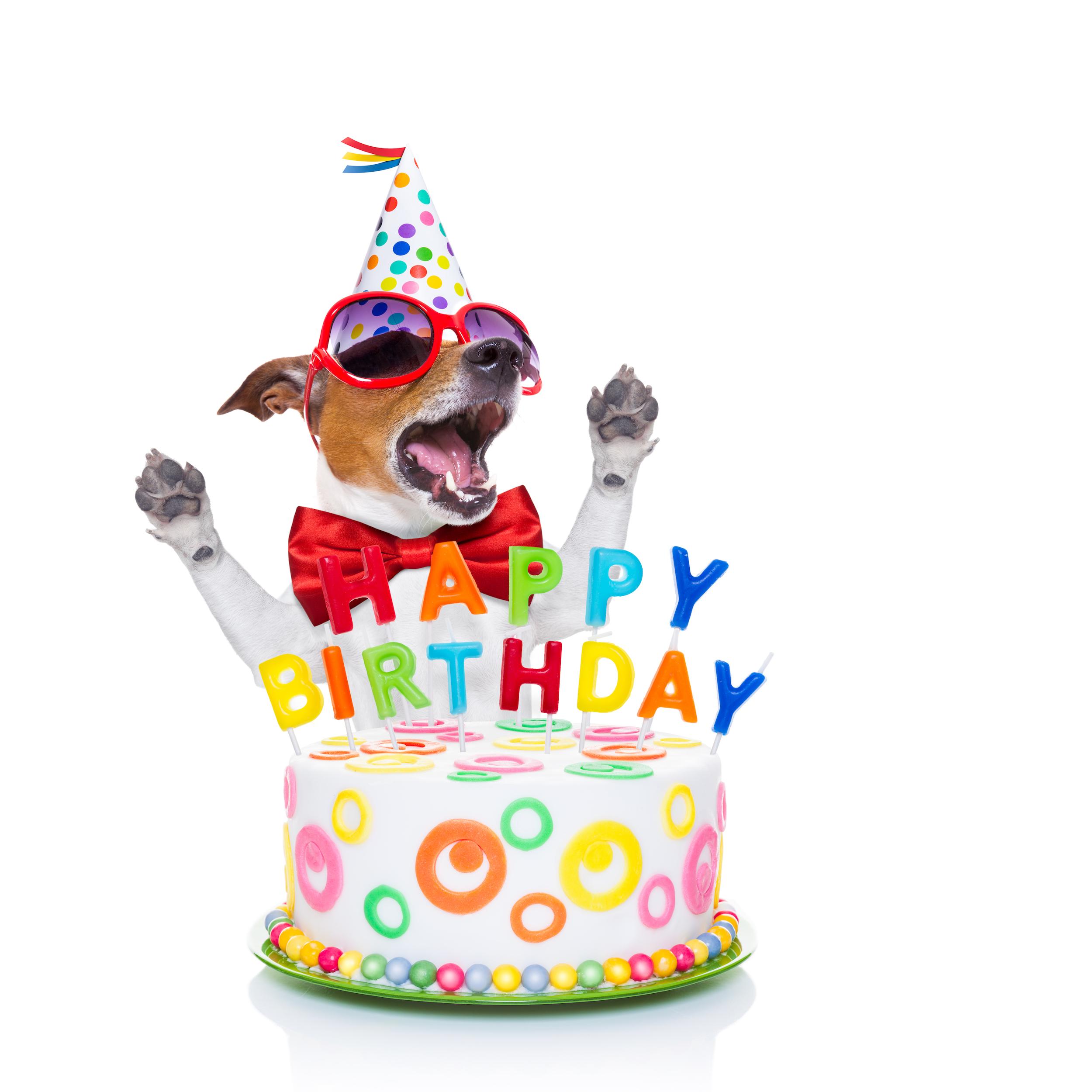 Prime How To Celebrate A Dog Birthday Barkly Pets Birthday Cards Printable Trancafe Filternl