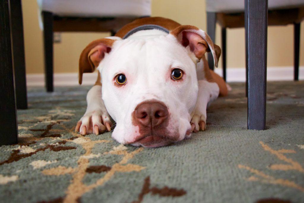 7 Amazing Dog Rescues In Washington D C Barkly Pets