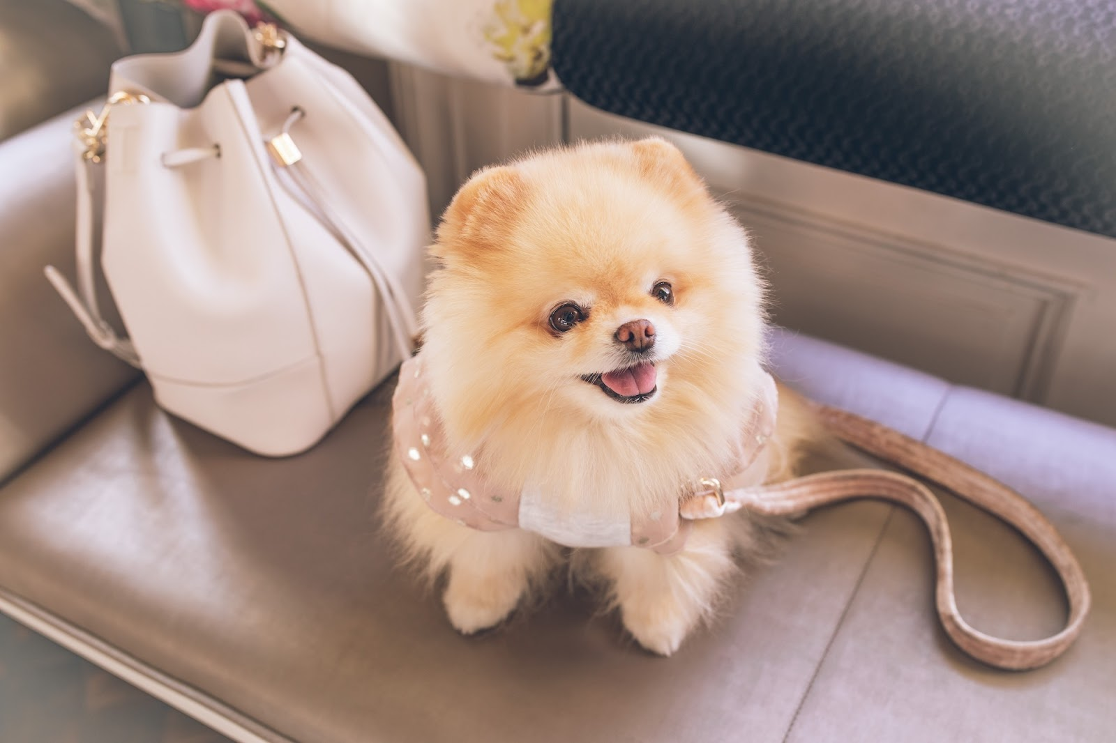 Flying with Dogs: Best and Banned Breeds on Airlines | Barkly Pets